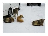 Осторожно, бродячие собаки!   Фотограф: 7388PetVladVik  Просмотров: 5085 Комментариев: 2