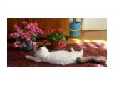 Кот в цикламенах Фотограф: Лика73  Просмотров: 4274 Комментариев: 0