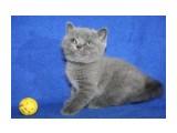 Название: кошка 3 Фотоальбом: котята Категория: Животные  Время съемки/редактирования: 2012:04:15 15:47:16 Фотокамера: Canon - Canon EOS 1000D Диафрагма: f/4.5 Выдержка: 1/60 Фокусное расстояние: 33/1    Просмотров: 386 Комментариев: 0