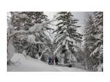 В зимнем лесу  Просмотров: 505 Комментариев: