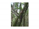 Грибы растут на земле, на пеньках, на стволах деревьев и просто в воздухе! Галюцинации...Ха! Ха! Ха!!!!