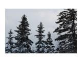 Елки на перевале.. к Новому году... Фотограф: vikirin  Просмотров: 1119 Комментариев: 0