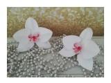 резинки орхидея сделано из фоамирана  Просмотров: 204 Комментариев: 0
