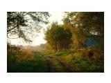 Утро.Туман. Фотограф: Mikhaylovich  Просмотров: 2160 Комментариев: 1