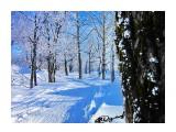 Деревья Фотограф: alexei1903  Просмотров: 1033 Комментариев: 1