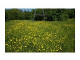 DSC02804 Фотограф: vikirin  Просмотров: 79 Комментариев: 0