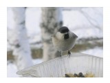 Название: PC280253 Фотоальбом: Птицы на моем окне Категория: Природа  Время съемки/редактирования: 2010:12:28 13:52:22 Фотокамера: OLYMPUS IMAGING CORP.   - FE250/X800              Диафрагма: f/4.7 Выдержка: 10/2000 Фокусное расстояние: 222/10 Светочуствительность: 64   Просмотров: 274 Комментариев: 0