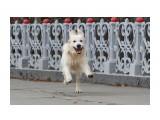 Название: На прогулке Фотоальбом: собаки Категория: Животные  Время съемки/редактирования: 2020:11:11 16:34:35 Фотокамера: Canon - Canon EOS 1200D Диафрагма: f/5.6 Выдержка: 1/1600 Фокусное расстояние: 135/1    Просмотров: 109 Комментариев: 0