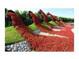 Название: Водопады цветов. Фотоальбом: Идеи Категория: Цветы  Просмотров: 104 Комментариев: 0