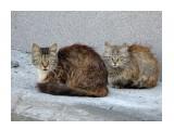 Название: Бездомные Фотоальбом: кошки Категория: Животные  Время съемки/редактирования: 2017:05:30 19:28:54 Фотокамера: SONY - DSC-H400 Диафрагма: f/5.2 Выдержка: 1/125 Фокусное расстояние: 65000/1000    Просмотров: 382 Комментариев: 0