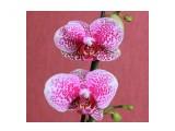 """Название: IMG_3668 Фотоальбом: Мои красотки """"Орхидеи"""" Категория: Цветы  Время съемки/редактирования: 2013:05:03 13:16:36 Фотокамера: Canon - Canon EOS 550D Диафрагма: f/7.1 Выдержка: 1/200 Фокусное расстояние: 39/1    Просмотров: 399 Комментариев: 0"""