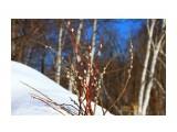 IMG_5097 Фотограф: vikirin  Просмотров: 715 Комментариев: 0