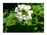 Белый, белый букет! Фотограф: viktorb  Просмотров: 734 Комментариев: 0
