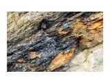 Угольный пласт Фотограф: В.Дейкин  Просмотров: 1202 Комментариев: 0