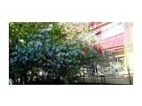 DSC03194 Сирень цветёт!  Просмотров: 73 Комментариев: 0