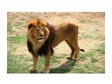 Название: IMG_7787 Фотоальбом: сафари-парк львов(крым) Категория: Животные  Просмотров: 1104 Комментариев: 0