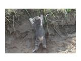 Название: альпинист Фотоальбом: кошки Категория: Животные  Просмотров: 540 Комментариев: 0