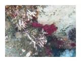 Название: Щупольце осьминога из норы Фотоальбом: Виды и добыча подводной охоты. Лето 2013г. Категория: Природа Фотограф: Тимофеев И.В.  Время съемки/редактирования: 2007:01:06 03:24:47 Фотокамера: Canon - Canon PowerShot A570 IS Диафрагма: f/2.6 Выдержка: 1/125 Фокусное расстояние: 5800/1000    Просмотров: 696 Комментариев: 0