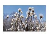 Название: _DSC0136 Фотоальбом: Зима... Категория: Пейзаж Фотограф: VictorV  Время съемки/редактирования: 2018:12:12 22:30:31 Фотокамера: SONY - DSLR-A900 Диафрагма: f/4.0 Выдержка: 1/3200 Фокусное расстояние: 240/10    Просмотров: 215 Комментариев: 0