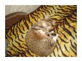 Название: DSC00795 Фотоальбом: Разное Категория: Животные  Время съемки/редактирования: 2007:10:25 22:47:10 Фотокамера: SONY - DSC-W70 Диафрагма: f/2.8 Выдержка: 10/400 Фокусное расстояние: 63/10    Просмотров: 494 Комментариев: 0