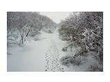 DSC03319_новый размер Фотограф: В.Дейкин  Просмотров: 1531 Комментариев: 0