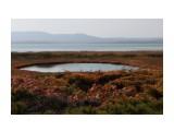 В озерцах уточки кормятся Фотограф: vikirin  Просмотров: 1571 Комментариев: 0