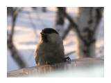Название: P1190265 Фотоальбом: Птицы на моем окне Категория: Природа  Время съемки/редактирования: 2011:01:19 17:48:59 Фотокамера: OLYMPUS IMAGING CORP.   - FE250/X800              Диафрагма: f/4.7 Выдержка: 10/1250 Фокусное расстояние: 222/10 Светочуствительность: 160   Просмотров: 249 Комментариев: 0