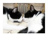 Бася и Мася спят...  Просмотров: 486 Комментариев: 1