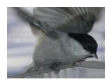 Название: P1190239 Фотоальбом: Птицы на моем окне Категория: Природа  Время съемки/редактирования: 2011:01:19 13:39:32 Фотокамера: OLYMPUS IMAGING CORP.   - FE250/X800              Диафрагма: f/4.7 Выдержка: 10/5000 Фокусное расстояние: 222/10 Светочуствительность: 64   Просмотров: 270 Комментариев: 0