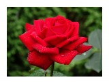 Название: DSC07410_н Фотоальбом: Розы в сквере музея Категория: Цветы  Время съемки/редактирования: 2016:07:29 10:58:18 Фотокамера: SONY - DSC-HX300 Диафрагма: f/5.6 Выдержка: 1/250 Фокусное расстояние: 15148/100    Просмотров: 42 Комментариев: 0