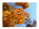 Название: На синем Фотоальбом: 2008 10 17 Осень в Южном Категория: Природа Фотограф: vikirin  Время съемки/редактирования: 2008:10:17 12:14:38 Фотокамера: Canon - Canon PowerShot SX100 IS Диафрагма: f/4.5 Выдержка: 1/1250 Фокусное расстояние: 6000/1000 Светочуствительность: 200   Просмотров: 4372 Комментариев: 0