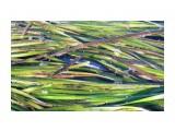Японский анчоус На море, в траве куча этой рыбки.  Просмотров: 341 Комментариев: 0