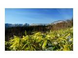Вид на хребет Шренка Фотограф: В.Дейкин  Просмотров: 1084 Комментариев: 0