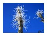 Деревья Фотограф: alexei1903  Просмотров: 1252 Комментариев: 0