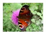Природа взаимотношений! Цветок и мотылек! Фотограф: viktorb  Просмотров: 838 Комментариев: 0