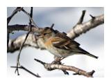 Название: Юрок Фотоальбом: Птицы Категория: Животные  Время съемки/редактирования: 2017:03:18 12:01:58 Фотокамера: SONY - DSC-HX300 Диафрагма: f/6.3 Выдержка: 1/250 Фокусное расстояние: 21500/100    Просмотров: 35 Комментариев: 0
