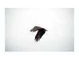 охотник Фотограф: ©  marka /печать больших фотографий,создание слайд-шоу на DVD/  Просмотров: 648 Комментариев: 0