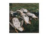 Название: 2112039 Фотоальбом: охота с сайгой Категория: Рыбалка, охота  Просмотров: 1259 Комментариев: 0