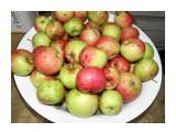 Сахалинские яблоки, выросшие в Холмском р-оне. Куплены у частника.  Просмотров: 56 Комментариев: