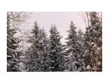 Зимний лес.. декабрь... Фотограф: vikirin  Просмотров: 1793 Комментариев: 0