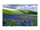 Название: Алтай :) Фотоальбом: Природа-2 Категория: Природа  Просмотров: 36 Комментариев: 0