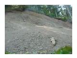Камянистые осыпи на серпантине по дороге к водопаду! Фотограф: viktorb  Просмотров: 871 Комментариев: 0