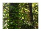 Название: 8F101F31-2B9A-4517-81F6-924C0BEB85D0 Фотоальбом: Императорское озеро Категория: Туризм, путешествия  Время съемки/редактирования: 2018:09:30 10:57:16 Фотокамера: Apple - iPhone 6s Диафрагма: f/2.2 Выдержка: 1/478 Фокусное расстояние: 83/20    Просмотров: 855 Комментариев: 0