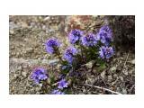 Что за растение?  Фотограф: vikirin  Просмотров: 1371 Комментариев: 0