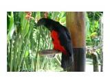Название: Орлиный попугай Фотоальбом: Остров богов Бали Категория: Туризм, путешествия  Время съемки/редактирования: 2021:04:14 07:40:30 Фотокамера: Canon - Canon EOS 400D DIGITAL Диафрагма: f/4.0 Выдержка: 1/200 Фокусное расстояние: 27/1    Просмотров: 104 Комментариев: 0
