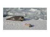 Название: DSC05144 Фотоальбом: море Категория: Животные  Просмотров: 380 Комментариев: 0