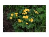 Что цветет по речкам... Фотограф: vikirin  Просмотров: 1649 Комментариев: 0