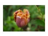DSC09354 Фотограф: NIK  Просмотров: 189 Комментариев: 0