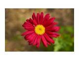 Название: _DSC7130 Фотоальбом: Цветочки-ягодки  разные... Категория: Цветы Фотограф: VictorV  Время съемки/редактирования: 2021:07:06 21:50:04 Фотокамера: SONY - DSLR-A900 Диафрагма: f/4.5 Выдержка: 1/2000 Фокусное расстояние: 500/10    Просмотров: 95 Комментариев: 0
