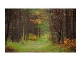 Прошлый осень Фотограф: Mikhaylovich  Просмотров: 1817 Комментариев: 0